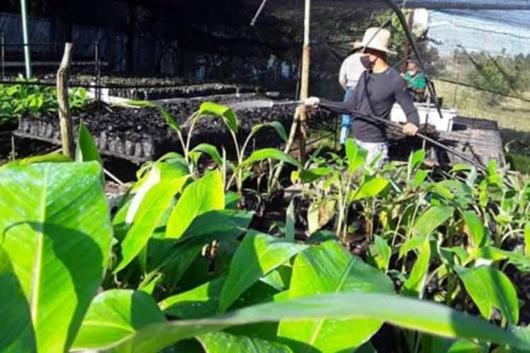 Cuba empeñada en la transformación de su agricultura