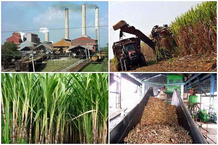 Diversificación, tarea inevitable de agroindustria azucarera en Cuba
