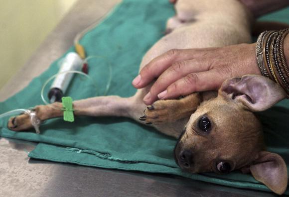 ¿Qué productos para uso veterinario es posible entrar o sacar de Cuba? (+PDF) (+ Video)